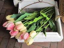 Tulip decoration Stock Image