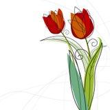 Tulip design Stock Photos