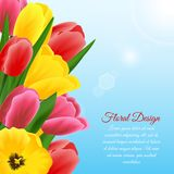 Tulip design background Stock Photo