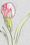 Tulip drawing isolated Royalty Free Stock Photo