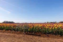 Tulip Farm Bench Lizenzfreies Stockbild
