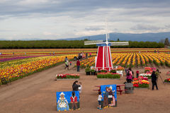 Tulip Farm Family Fun Stock Photos