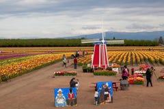 Tulip Farm Family Fun Stock Photos