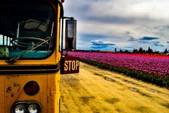 Tulip Farm School Bus imagem de stock royalty free