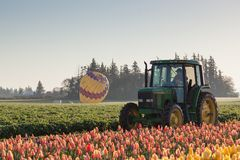 Tulip Farm With a Tractor and Hot Air Balloon stock photography