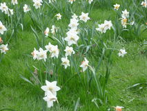 Tulip Festival Fotografie Stock