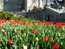 Tulip Festival Immagini Stock