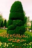 Tulip Festival Images libres de droits