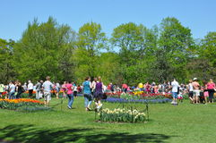Tulip Festival in Albany, New York State Stock Photos