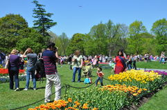 Tulip Festival in Albany, New York State Royalty Free Stock Photos