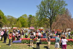 Tulip Festival in Albany, New York State Stock Photo