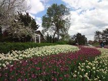 Tulip Festival in Otawa Kanada Lizenzfreie Stockfotografie