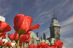 Tulip Festival in Ottawa royalty free stock image