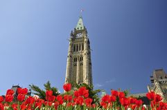 Tulip Festival in Ottawa Stock Photos