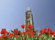Tulip Festival in Ottawa royalty free stock photos