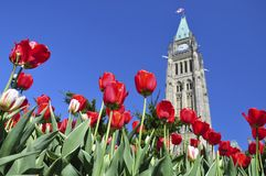 Tulip Festival in Ottawa Royalty Free Stock Photo
