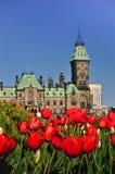 Tulip festival in Ottawa Stock Images