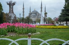 Tulip Festival in Sultanahmet Square and Sultanahmet Mosque, Ist royalty free stock image
