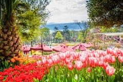 Tulip Festival tradicional en el parque de Emirgan en Estambul, Turquía fotografía de archivo