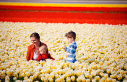 In tulip field Stock Photography