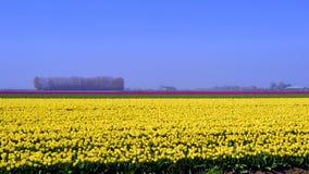 Tulip Field Lizenzfreie Stockbilder