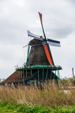 Tulip field adnd old mills in netherland Stock Image