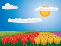 Tulip field vector illustration