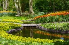 Tulip Field Garden Imagens de Stock Royalty Free