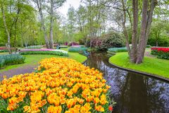Tulip field in Netherlands Stock Images