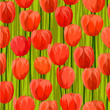 Tulip field seamless background Stock Photography