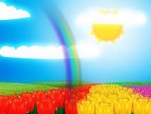 Tulip field under sun Royalty Free Stock Photo