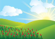 Tulip field - vector Stock Photos