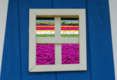 Tulip fields in summer through window frame Stock Images