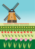 Tulip fields and windmill Stock Photo