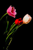 Tulip Floral arrangement Stock Images