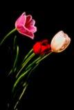Tulip Floral arrangement Stock Images