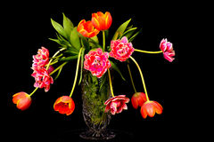 Tulip Floral Arrangement. Isolated over a black background Stock Photography