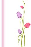Tulip Floral Background Stock Photography