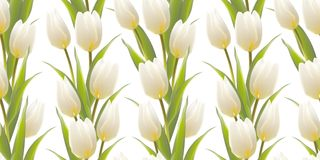 Tulip, floral background, seamless pattern. Royalty Free Stock Image