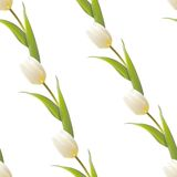 Tulip, floral background, seamless pattern. Vector illustration Stock Photos