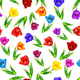 Tulip, floral background, seamless pattern. Vector illustration. Royalty Free Stock Photo