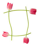 Tulip floral border royalty free stock image