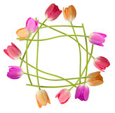 Tulip floral border Stock Photography