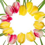 Tulip flower background with a copyspace. EPS 8 Royalty Free Stock Photo