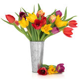 Tulip Flower Beauty Royalty Free Stock Image