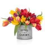 Tulip Flower Beauty royalty free stock photos