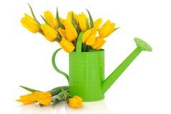 Tulip Flower Beauty Stock Image