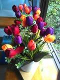 Tulip flower. Is besutiful royalty free stock image