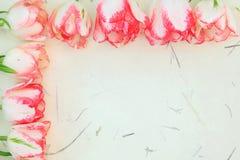 Free Tulip Flower Border Royalty Free Stock Photography - 38160537