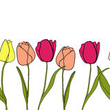 Tulip flower border background vector Royalty Free Stock Images